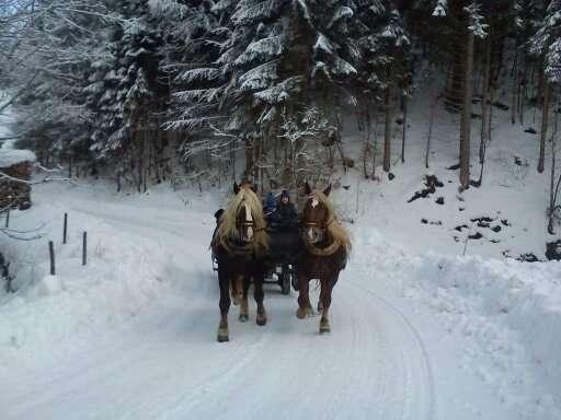 Horse Drawn Sleigh Ride Muehlbach am Hochkoeing
