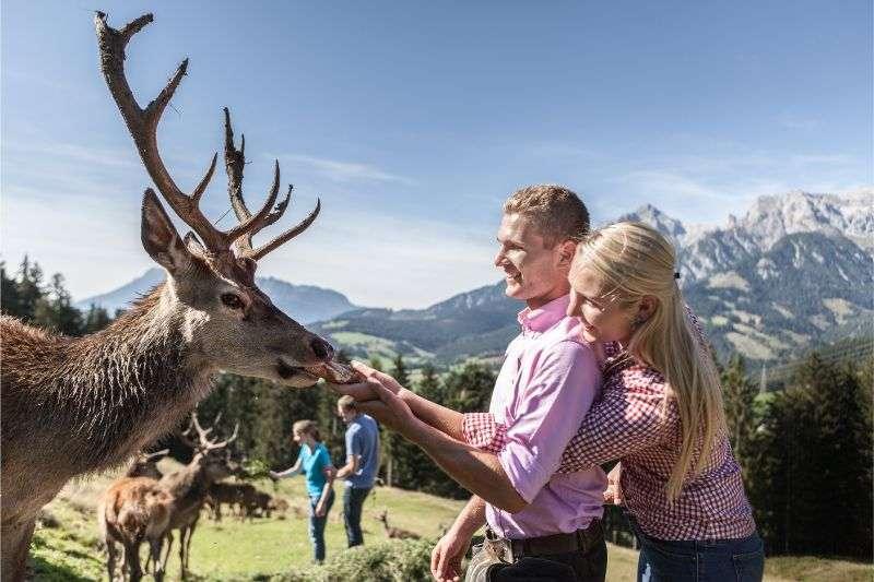 bauernherbst-salzburg-wildwochen